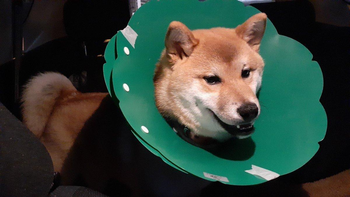 犬 避妊手術 術後