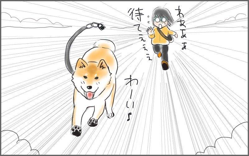 近くの公園を走り回る大五郎(追いかける私)